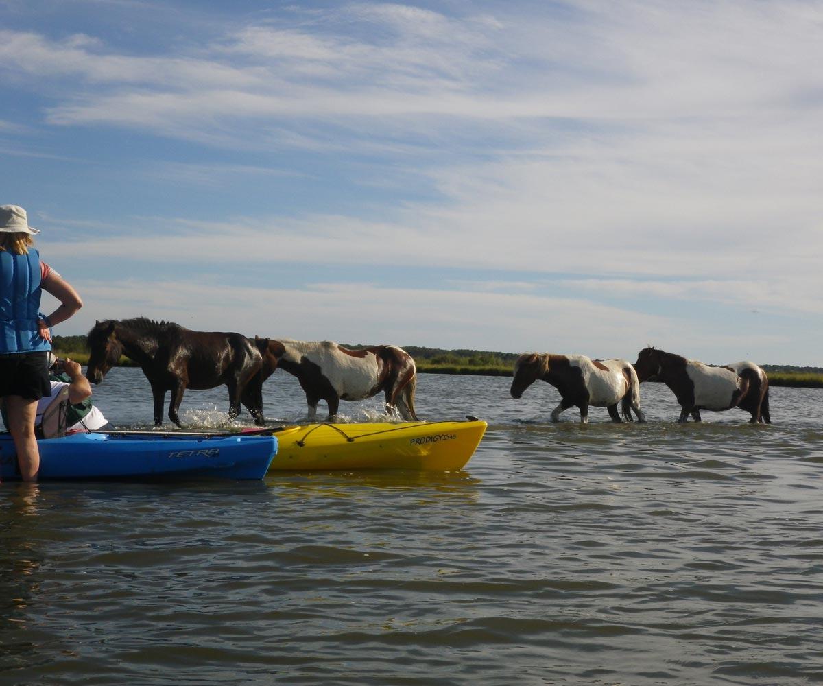 horses-and-kayaks