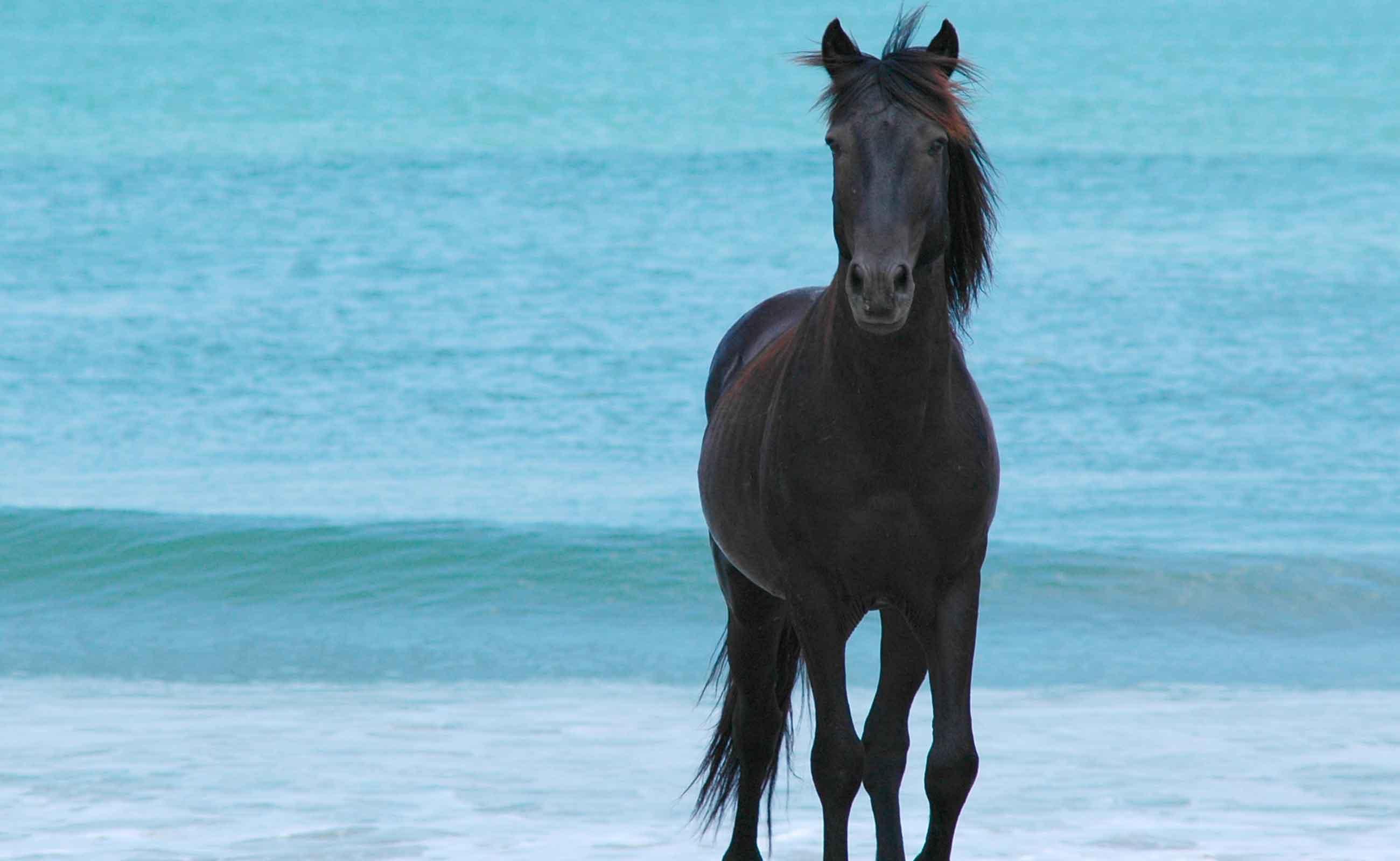 corolla-wild-pony