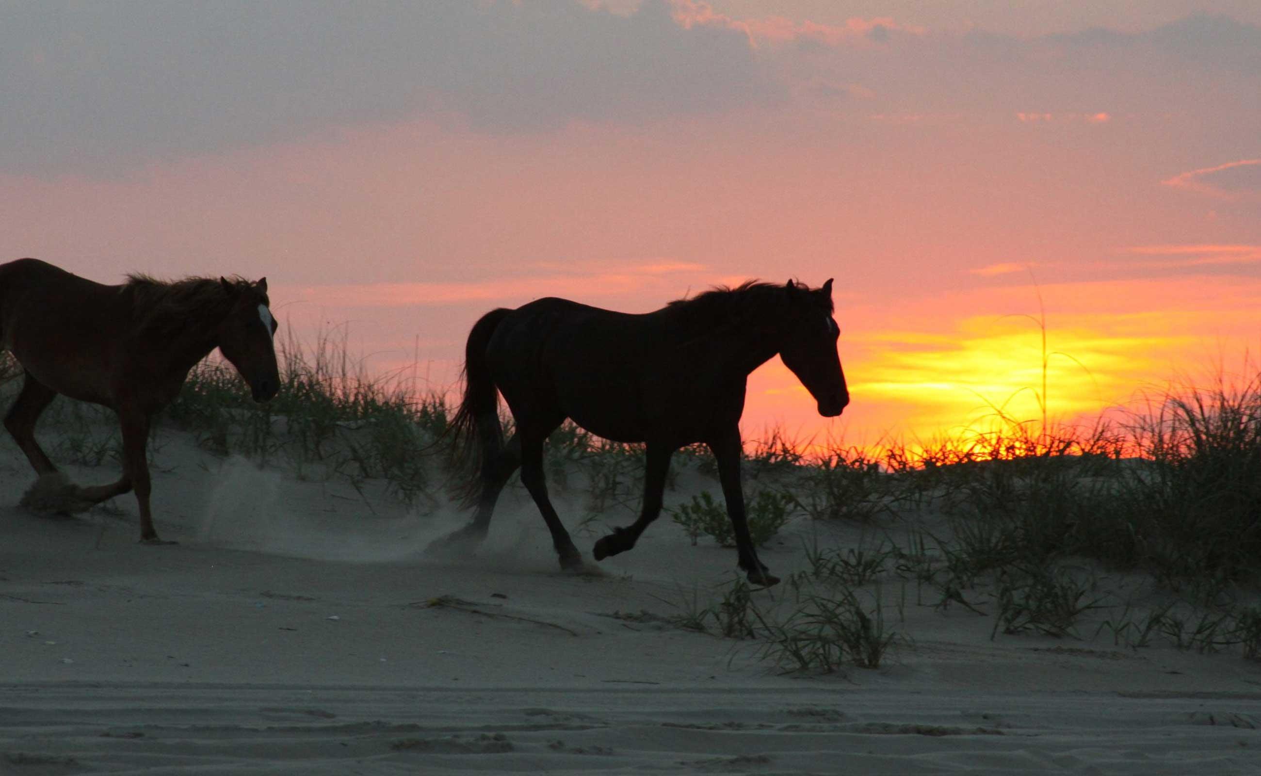 obx-ponies-sunset